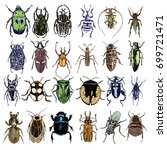 big set of color insect stipple ... | Shutterstock .eps vector #699721471