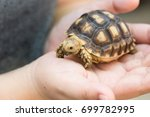 Sulcata Tortoise Turtle Pet ...