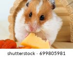 Stock photo a hamster close up eats cheese near its wooden house 699805981