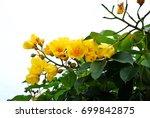 Buttercup Tree  Yellow Silk...