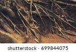 tree roots above the ground ... | Shutterstock . vector #699844075