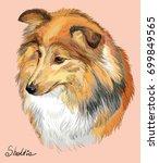 sheltie  shetland sheepdog ...   Shutterstock .eps vector #699849565