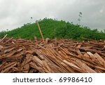 rain forest destruction in... | Shutterstock . vector #69986410