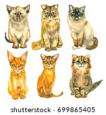 set of watercolor hand drawn... | Shutterstock . vector #699865405