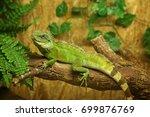 iguana in zoological garden | Shutterstock . vector #699876769