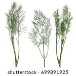 green dill branches isolated on ... | Shutterstock . vector #699891925