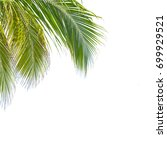 green leaf palm tree on white... | Shutterstock . vector #699929521