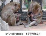 monkey family.   Shutterstock . vector #69995614