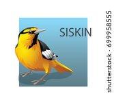 american yellow bellied siskin. ... | Shutterstock .eps vector #699958555