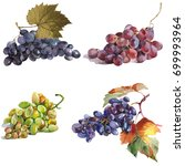 grapes branches watercolor hand ... | Shutterstock . vector #699993964