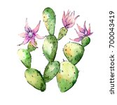 wildflower cactuses flower in a ... | Shutterstock . vector #700043419