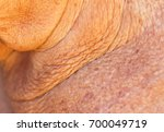 wrinkles on the neck from the... | Shutterstock . vector #700049719