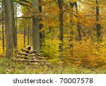 fenced Anthill - stock photo