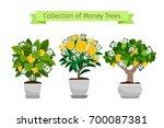 money tree in flower pot... | Shutterstock .eps vector #700087381