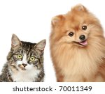 Stock photo cat and spitz puppy on a white background 70011349