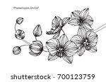 hand drawn and sketch orchids... | Shutterstock .eps vector #700123759