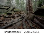 tree with big twisted roots in... | Shutterstock . vector #700124611