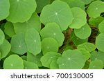 collection of leaves | Shutterstock . vector #700130005