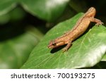 A Smooth Newt  Also Known As...