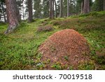 Rare Wood Ants Nest In The...
