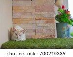 the stray cat sleep on the... | Shutterstock . vector #700210339