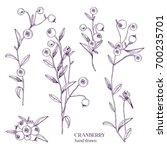 cranberry set. detailed hand... | Shutterstock .eps vector #700235701