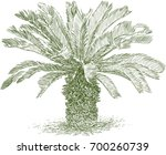 small tropical palm tree   Shutterstock .eps vector #700260739