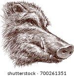 muzzle of a wild boar | Shutterstock .eps vector #700261351