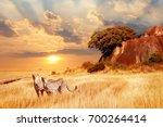 Cheetahs In The African Savann...