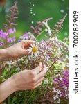 summer bouquet flowers outdoor | Shutterstock . vector #700282909