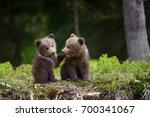 wild brown bear cub close up   Shutterstock . vector #700341067