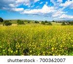 wild flower meadow  piper hole  ... | Shutterstock . vector #700362007