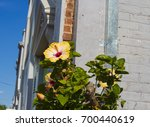 bright yellow suffused with...   Shutterstock . vector #700440619