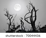 Bare Trees With Full Moon...