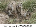a group of young ground... | Shutterstock . vector #700502281