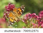 Beautiful Butterfly On A Flower....