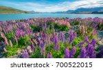 landscape at lake tekapo and... | Shutterstock . vector #700522015