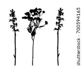 vector plant silhouettes with... | Shutterstock .eps vector #700594165