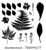 vector plant silhouettes with... | Shutterstock .eps vector #700594177