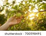 closeup of man farmer hand...   Shutterstock . vector #700598491