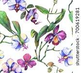 wildflower orchid flower...   Shutterstock . vector #700619281