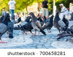 Dense Group Of Pigeons With...