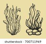 algae vector sketch. hand... | Shutterstock .eps vector #700711969