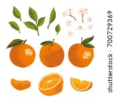 Vector Summer Set With Oranges...