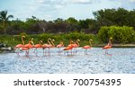 Flamingoes At Celestun...