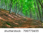 green forest with ground... | Shutterstock . vector #700773655