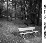 Small photo of Lonely bench in the woods / forest. Concept of solitude depression, loneliness. Black and white.