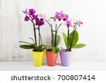 three orchids in pots on a...   Shutterstock . vector #700807414