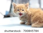 Stock photo angry ginger kitten 700845784