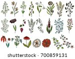 set of floral elements for... | Shutterstock .eps vector #700859131